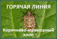 Горячая Коричнево-мраморный клоп