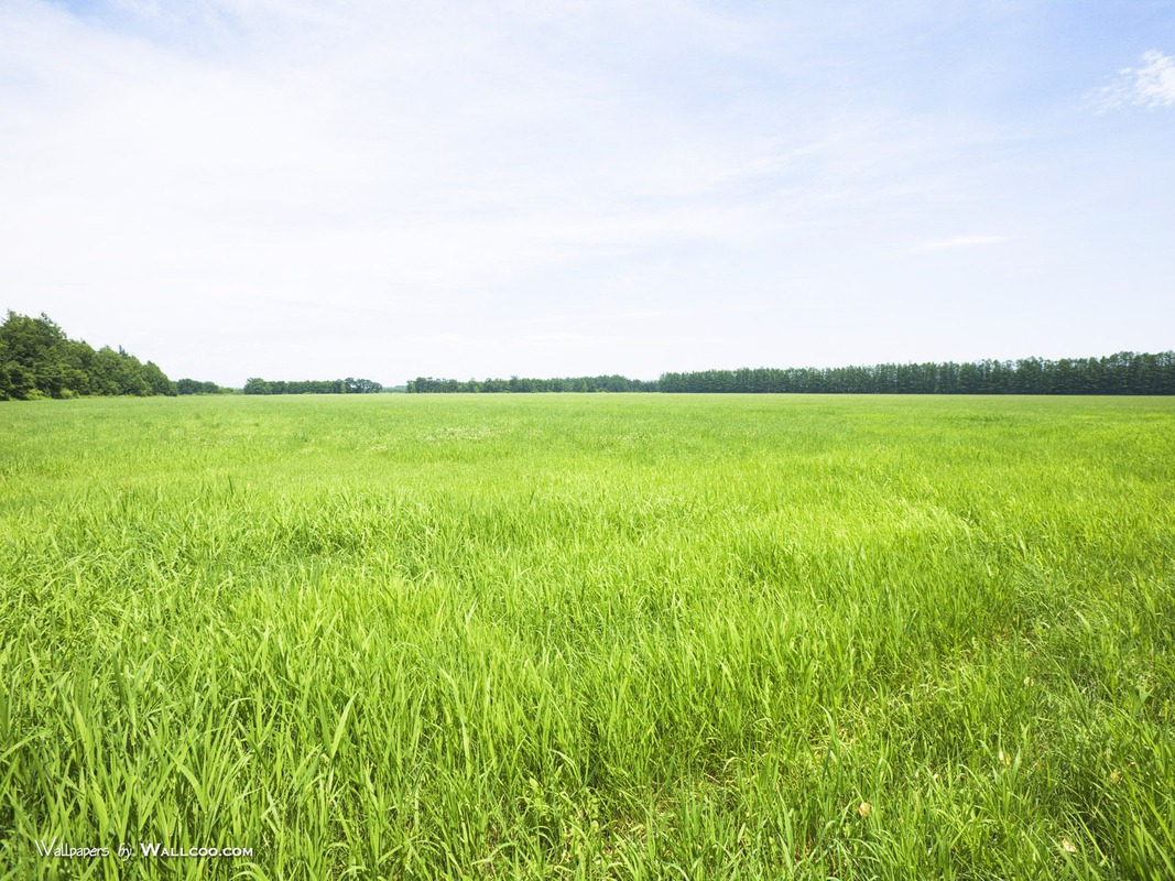 Сколько стоит земля сельхозназначения в рязанской области