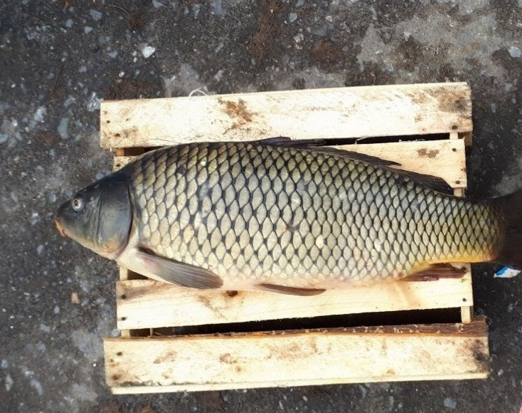 Неверкино рыбалка